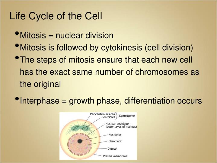 Life Cycle of the Cell