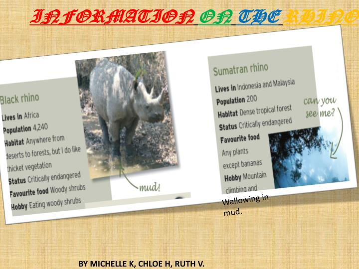 Information on the rhino