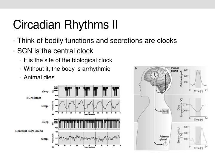 Circadian Rhythms II