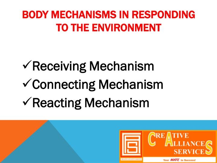 Body mechanisms in responding to the environment