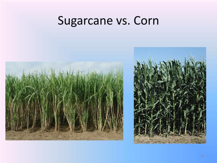 Sugarcane vs. Corn