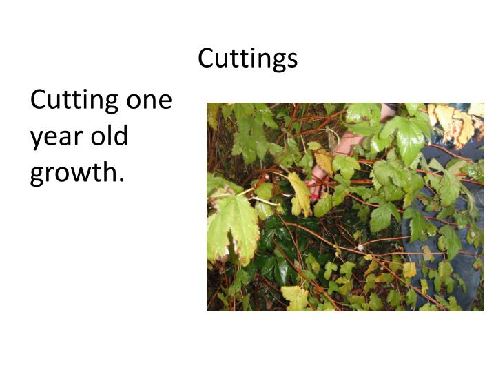 Cuttings