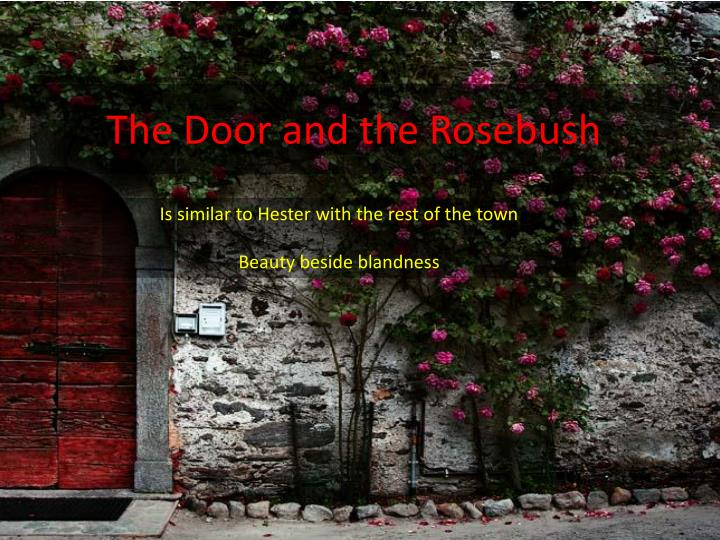 The door and the rosebush