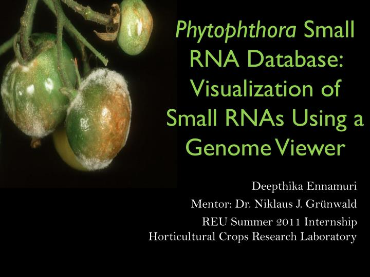 Phytophthora small rna database visualization of small rnas using a genome viewer