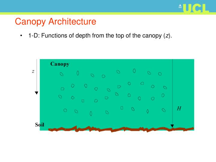 Canopy Architecture