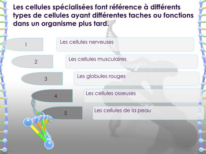 Les cellules spécialisées font référence à différents types de cellules ayant différentes taches ou fonctions dans un organisme plus tard.