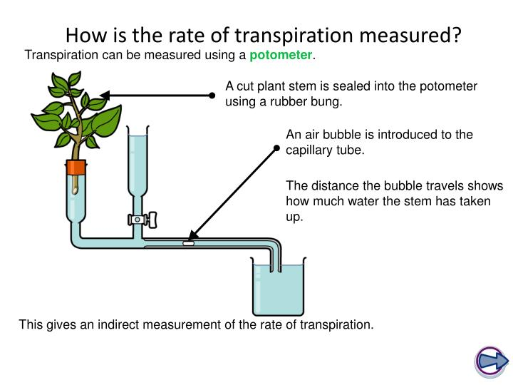 How is the rate of transpiration measured?
