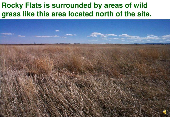 Rocky Flats is surrounded by areas of wild grass like this area located north of the site.