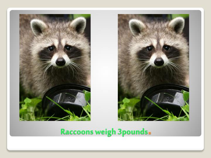 Raccoons weigh 3pounds