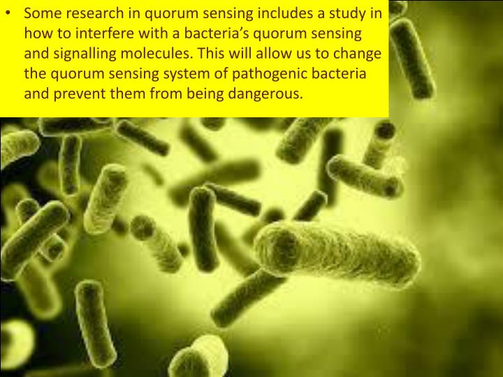 Some research in quorum sensing includes a study in how to interfere with a bacteria's quorum sensing and signalling molecules. This will allow us to change the quorum sensing system of pathogenic bacteria and prevent them from being dangerous.
