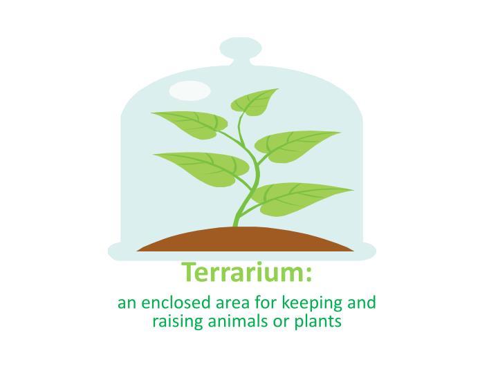 Terrarium:
