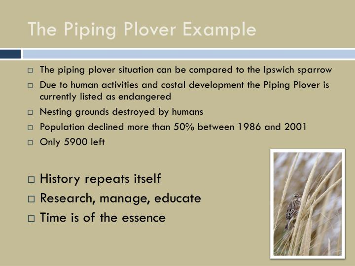 The Piping Plover Example