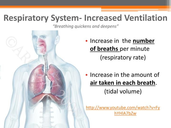 Respiratory System- Increased Ventilation