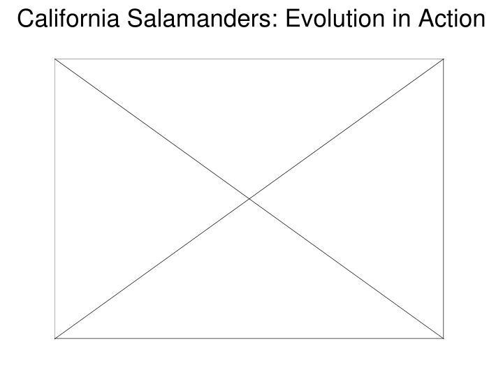 California Salamanders: Evolution in Action