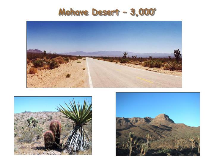 Mohave Desert – 3,000'