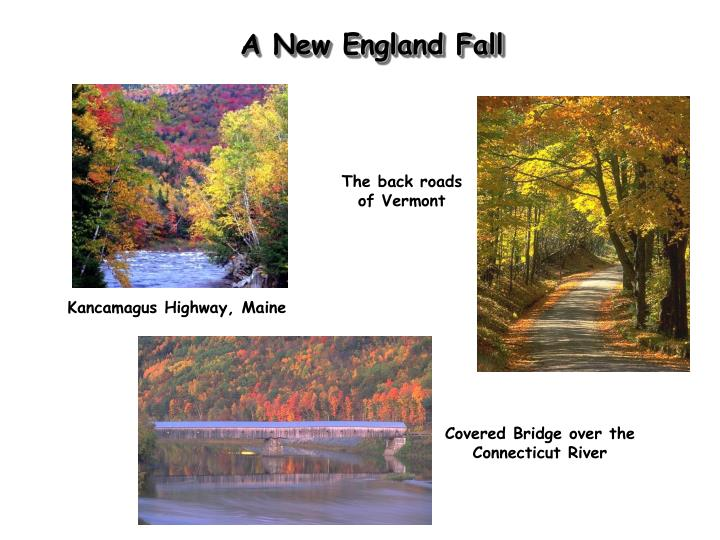A New England Fall