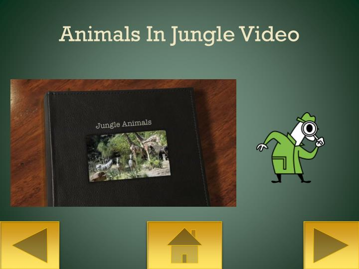 Animals In Jungle Video