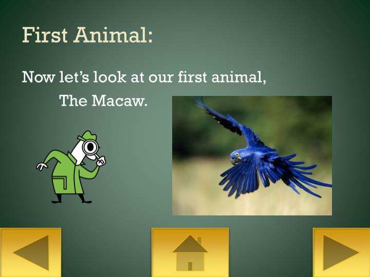 First Animal: