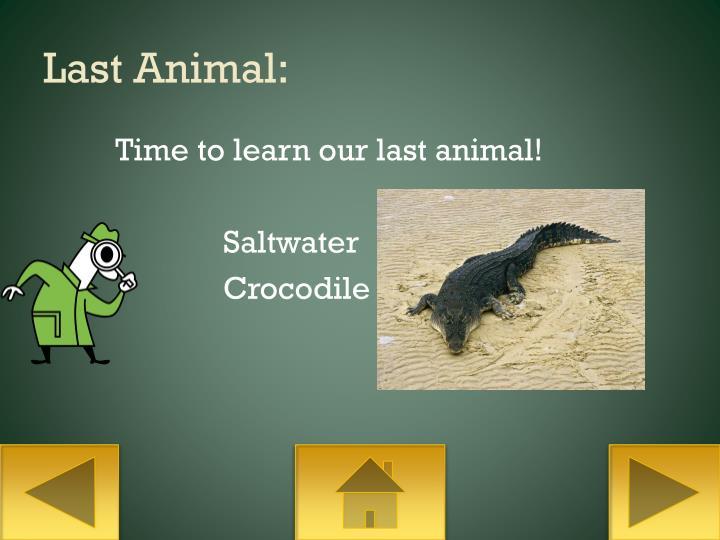Last Animal: