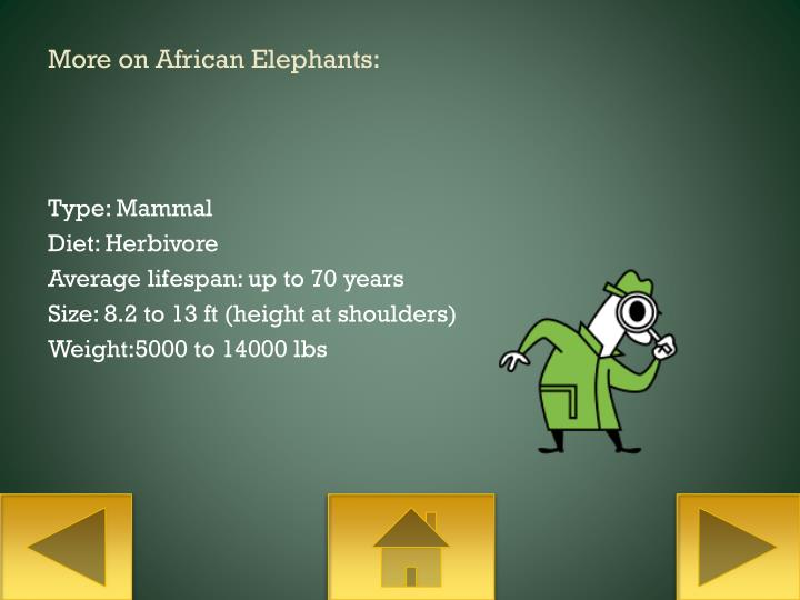 More on African Elephants: