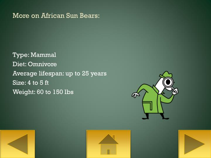 More on African Sun Bears: