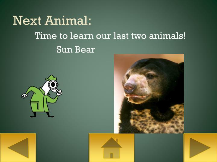 Next Animal:
