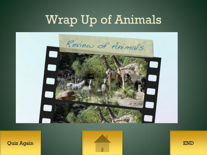 Wrap Up of Animals