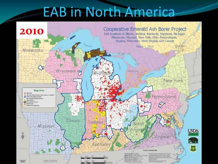 Eab in north america