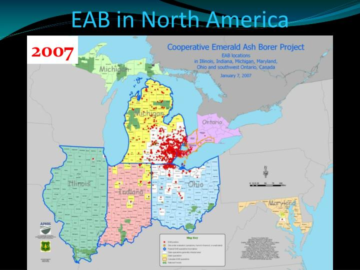Eab in north america1