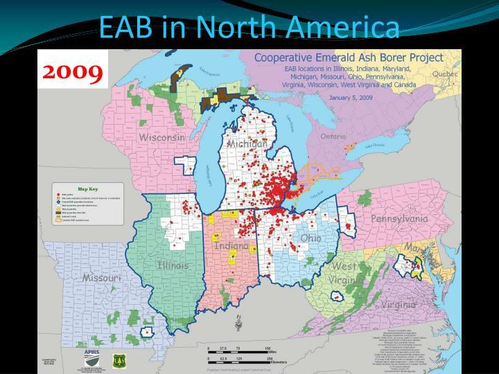 EAB in