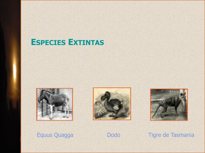 Especies Extintas