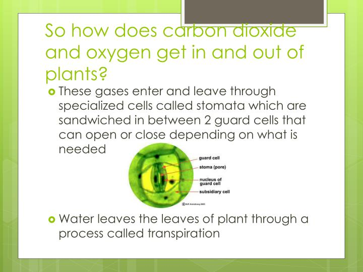 So how does carbon dioxide and oxygen get in and out of plants?