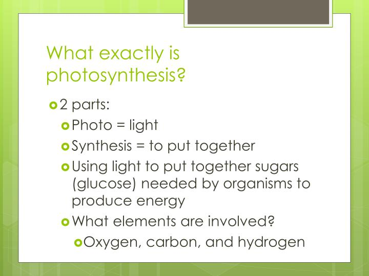 What exactly is photosynthesis