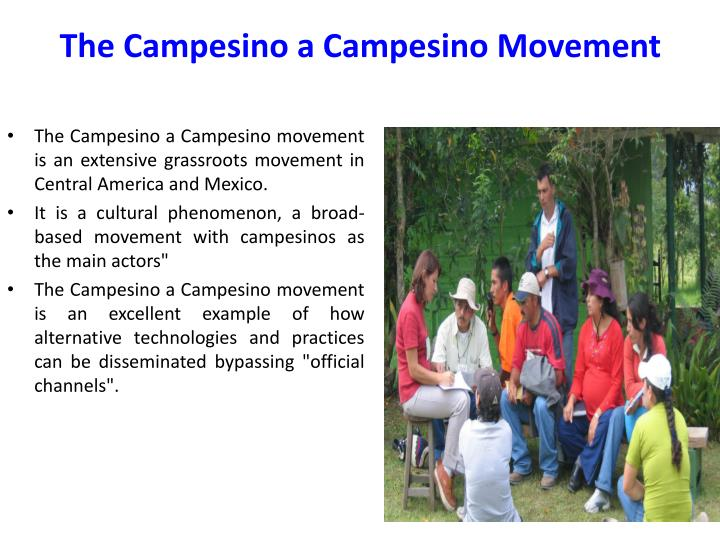 The campesino a campesino movement