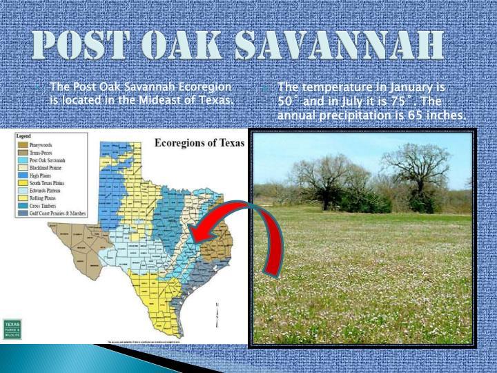 Post Oak Savannah