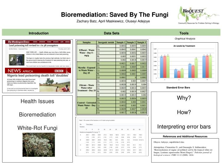 Bioremediation saved by the fungi