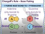 chargaff s rule base pairing