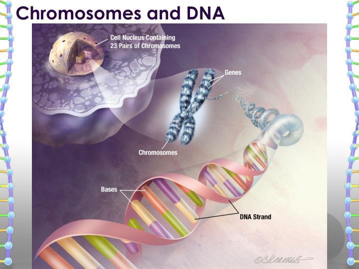 Chromosomes and DNA