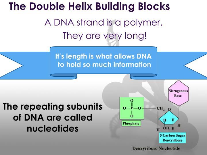 The Double Helix Building Blocks