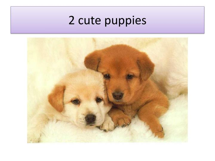 2 cute puppies