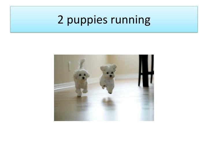 2 puppies running