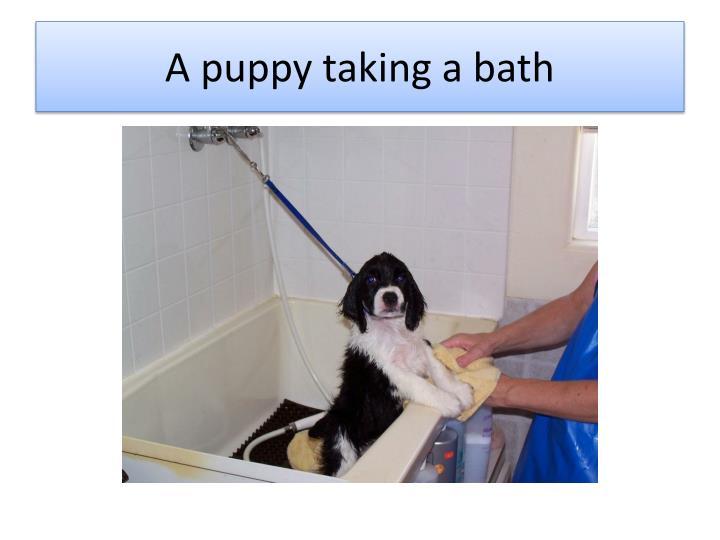 A puppy taking a bath