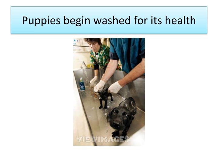 Puppies begin