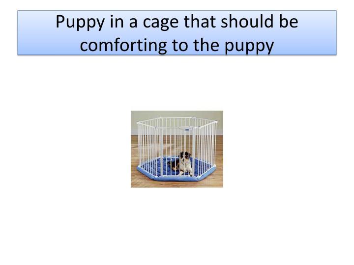 Puppy in a