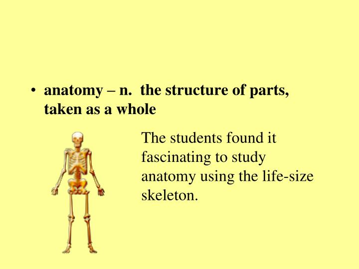 anatomy – n.  the structure of parts, taken as a whole