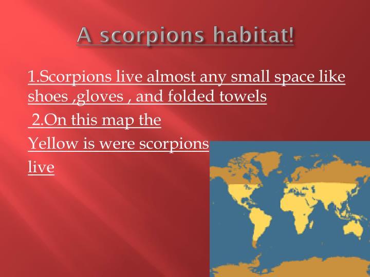A scorpions habitat!