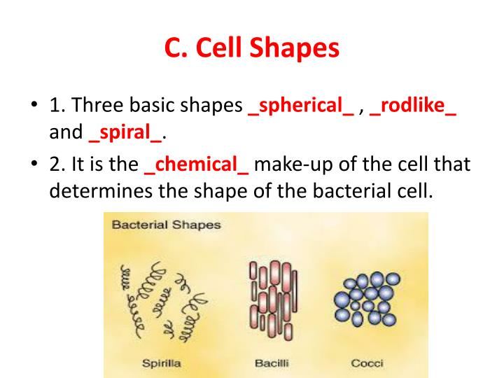 C. Cell Shapes