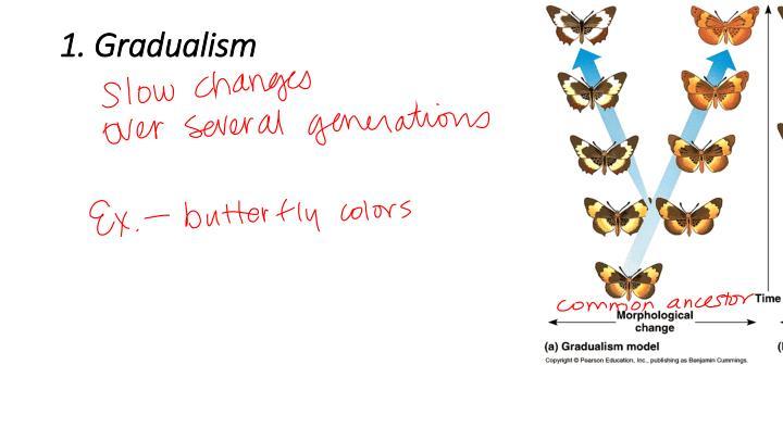 1. Gradualism