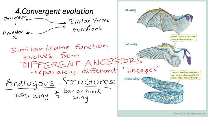 4.Convergent evolution