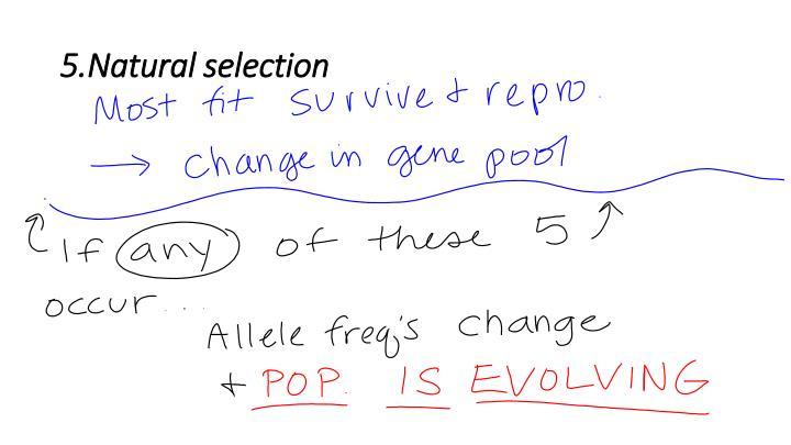 5.Natural selection